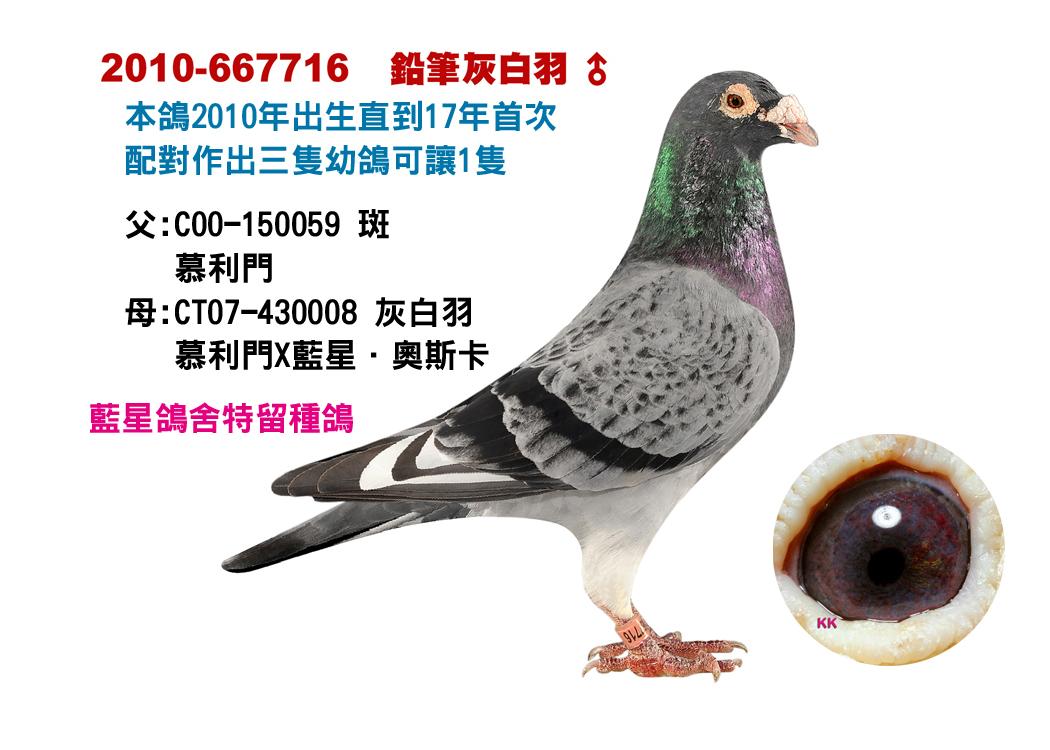 08-2010-667716    鉛筆灰白羽公.jpg
